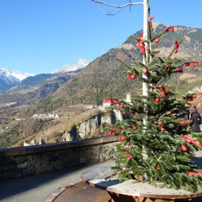 Castel Tirolo - percorso con pini e mele