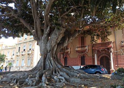 ungomare Reggio Calabria Ficus